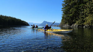 Whales and Grizzly Bears Kayak Tour - Heading back to camp after a day of kayaking.