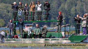 Whales and Grizzly Bears Kayak Tour - After arriving in Glendale Cove in Knight Inlet by covered boat we move to these viewing boats to watch the grizzly bears.